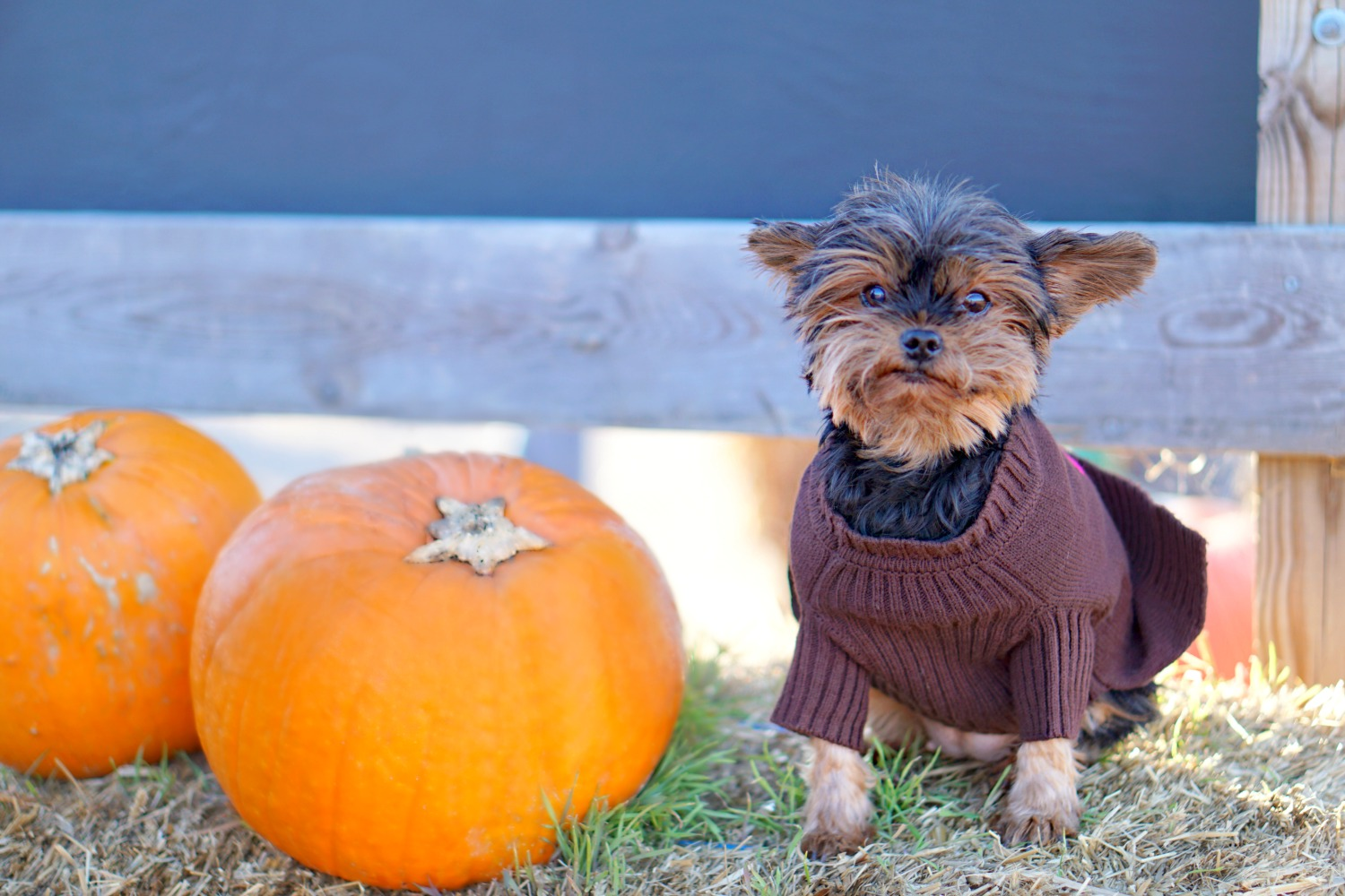 stylesprinter-360-cashmere-sweater-for-dogs-supermodel